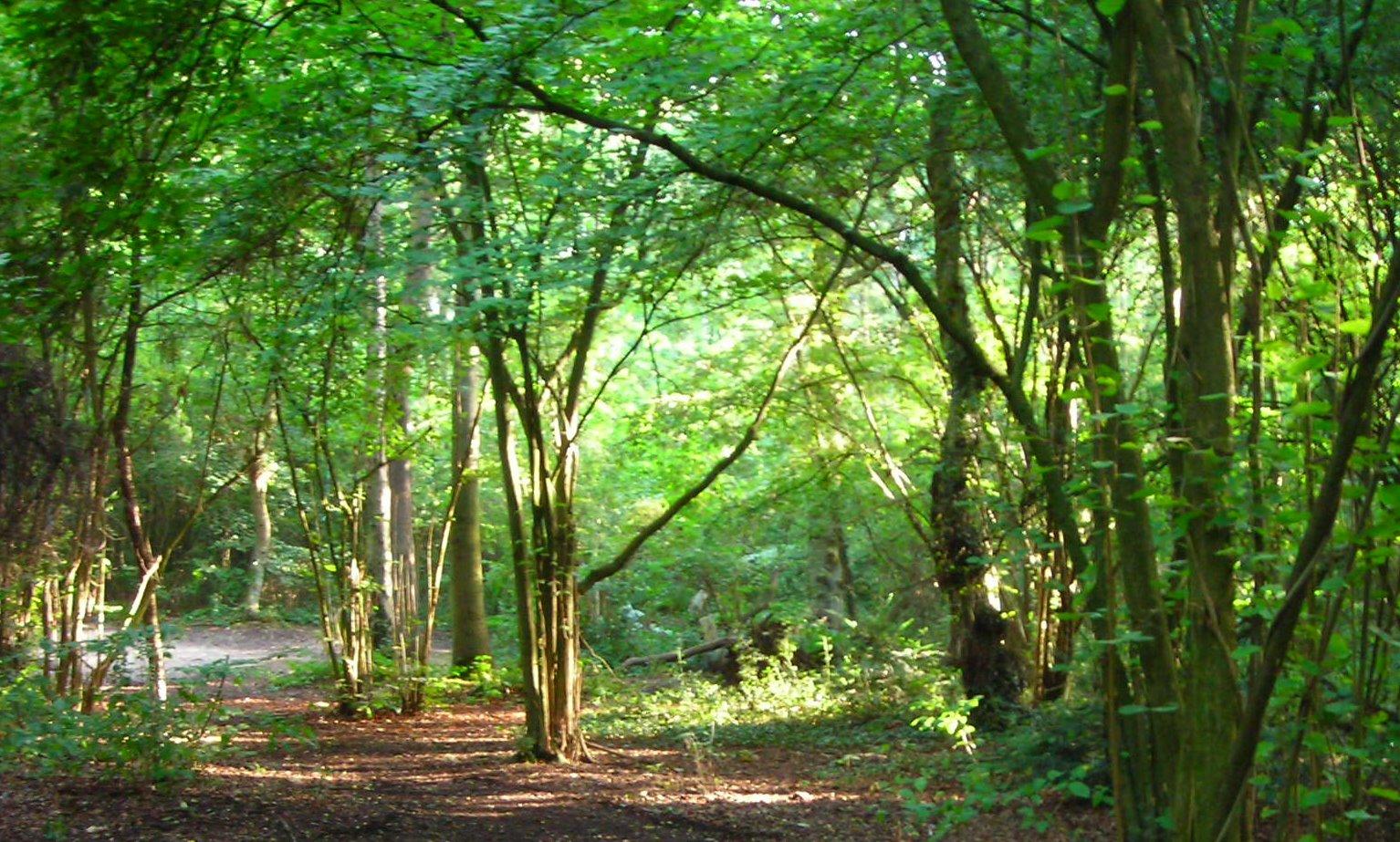greenwich oxleas wood