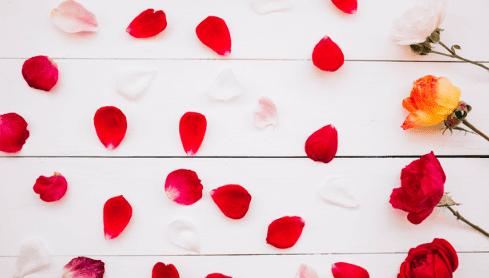 أجمل تجميعة لصور الورد الأحمر ستحبها