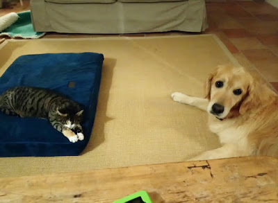 Cat and dog not sharing a bed