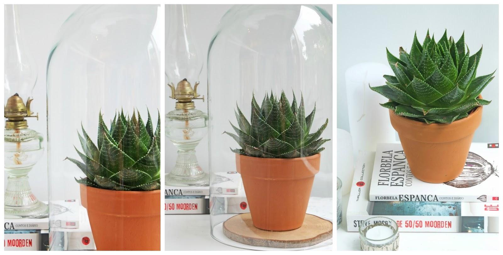Alles over vetplanten (succulenten) in je interieur. (interieur ...