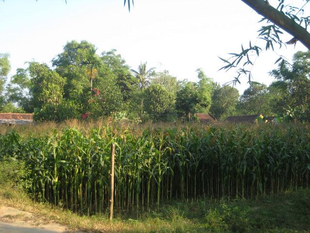 Hình ảnh làng quê Thủy Triều, Phổ Văn, Đức Phổ 14