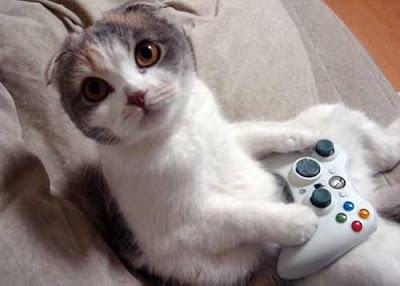 chat qui joue aux jeux vidéos