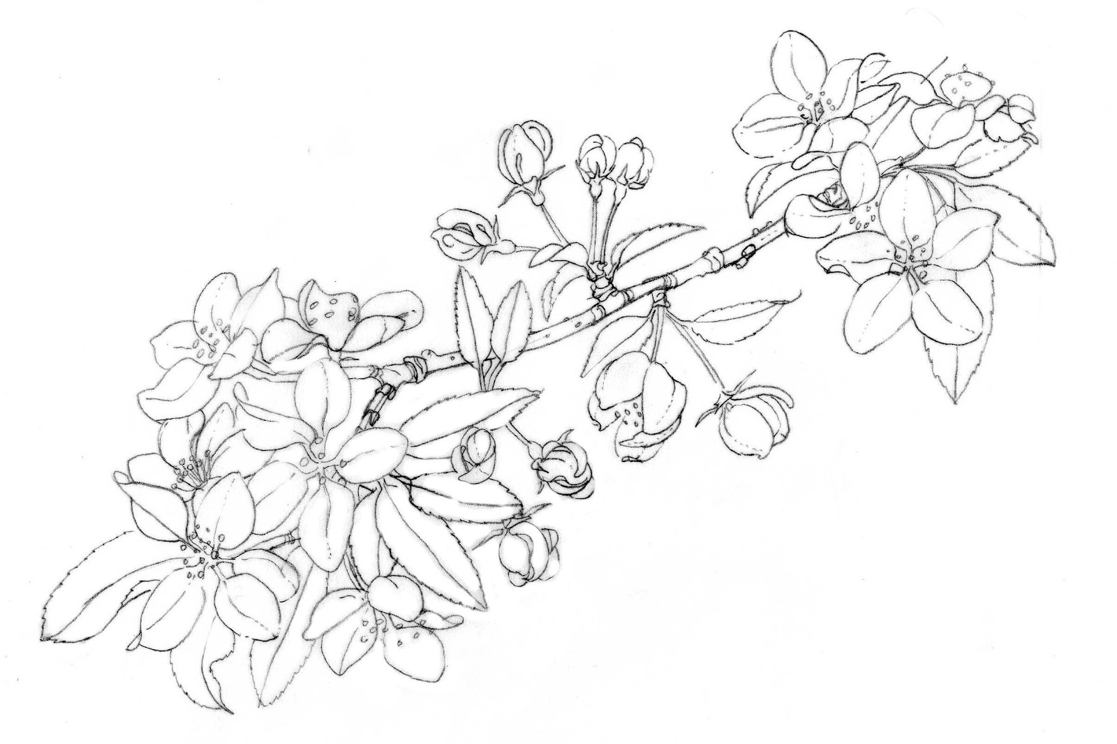 Botanical art coloring book - Sunday March 18 2012