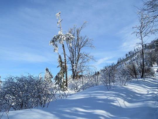 Pozbawione lasu stoki Lubania.