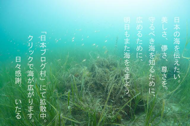 http://marine.blogmura.com/diving/