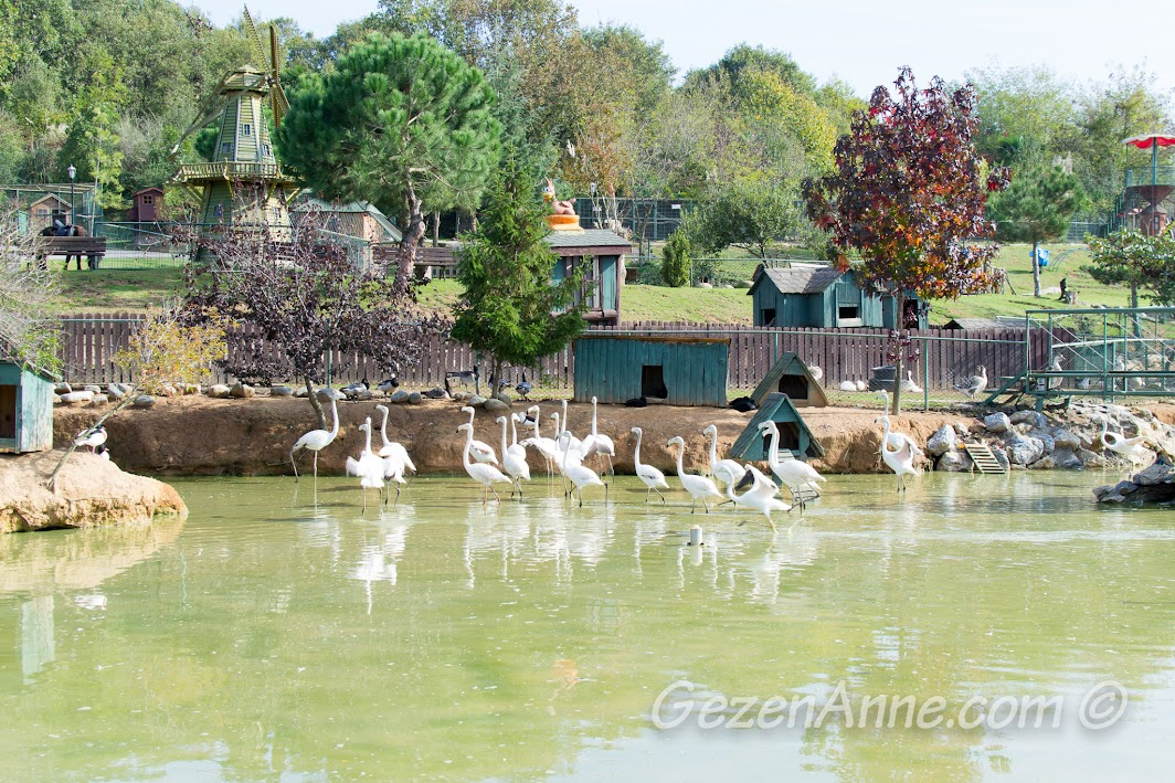 Piknik park hayvanat bahçesi ortamı, Polonezköy Country Club