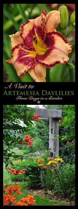 A Visit to Artemesia Daylilies