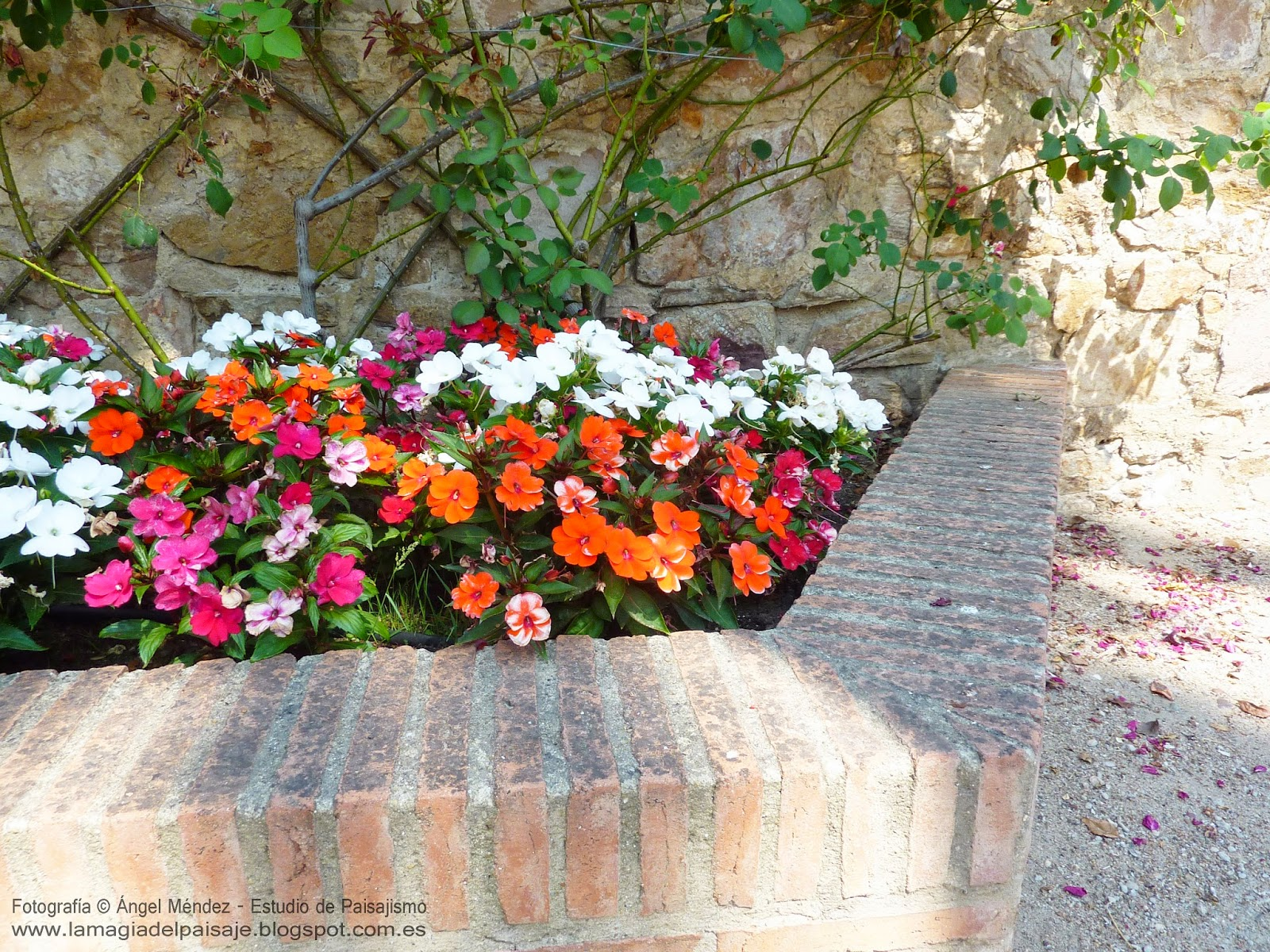 Truco evitar grietas en las jardineras de ladrillo for Jardineras para patio casa