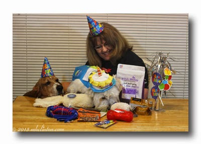 Westie and Basset birthday party