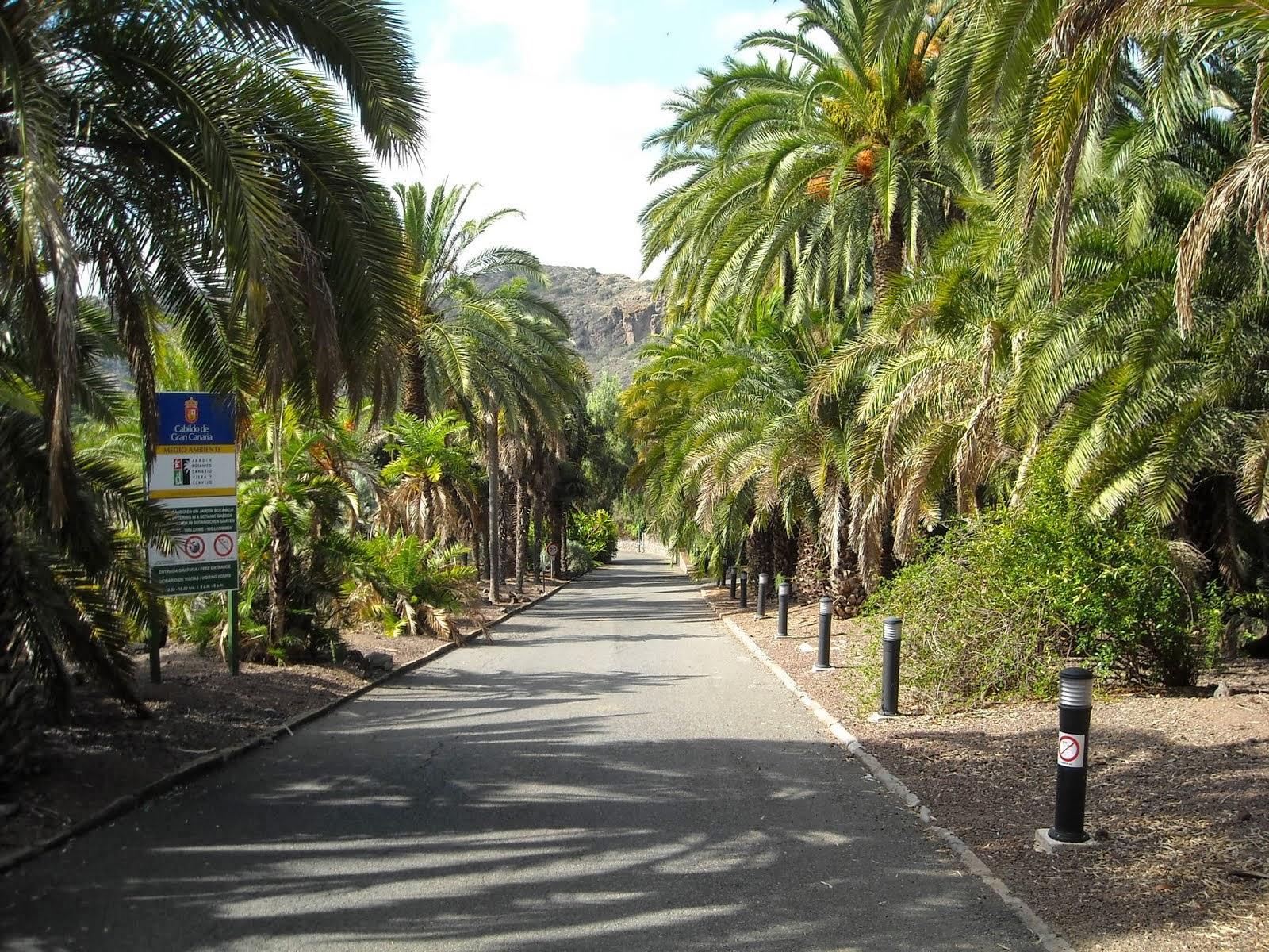 Allied Robert Zemeckis Las Palmas di Gran Canaria