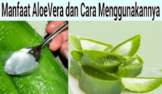 Manfaat Aloe Vera: Cara Menggunakan Aloe vera untuk Rambut, Wajah dan Berat badan