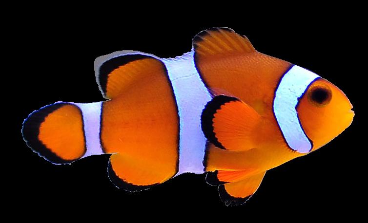 ikan2