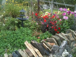 vintage, gardening, dahlias, life on pig row