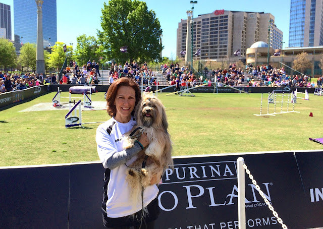 Purina incredible dog challenge prizes clip