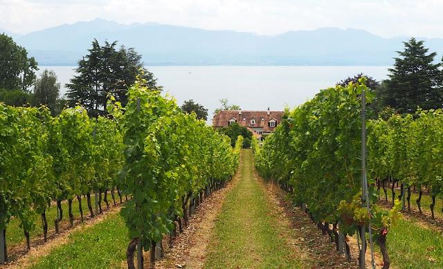 Lac leman, meer van genève, nyon, lausanne, montreux, aigle, fietsen, fietsvakantie, wijngaarden, wijnterrassen van lavaux, bmc, zwitserse wijnen, vaud, geneve, vevey, chasselas, beste zwitserse wijn, filets de perches du lac leman, route du rhône, Château de Nyon, malakoff, château de rolle, luins, eglise de luins, chateau de morges, Domaine des Papillions Coinins, domaine sainte-amour cully, ile de la harpe, saint-prex, perroy,