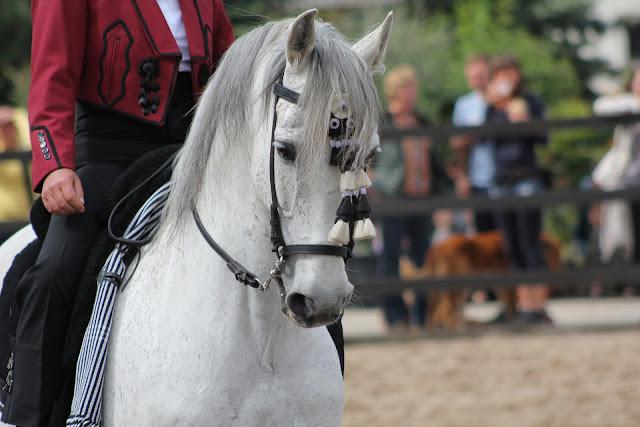 Jak użyć łydek tak, żeby wpłynęły na konia?