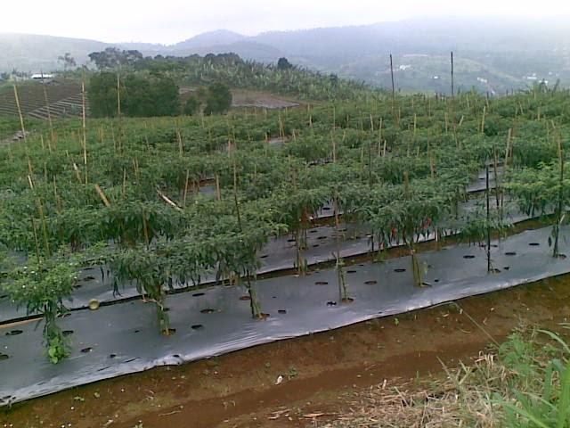 Foto(5191) Jual Tanah Milik Luas 12 Ha, Lokasi puncak Jual tanah di cipanas jual tanah di puncak