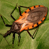 National Institutes of Health awards grant for new point-of-care test for Chagas disease