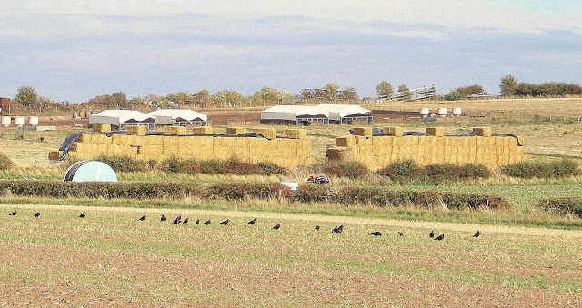 Bales on fields in Hopwas