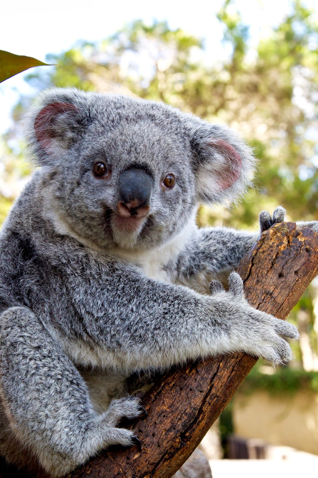 Life In the Desert: Koalas and reptiles...