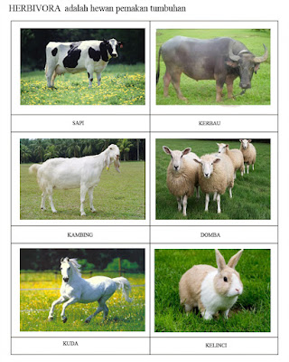 60 Koleksi Gambar Binatang Pemakan Daging Dan Tumbuhan Gratis Terbaik