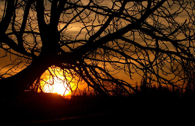 Słońce wśród gałęzi.