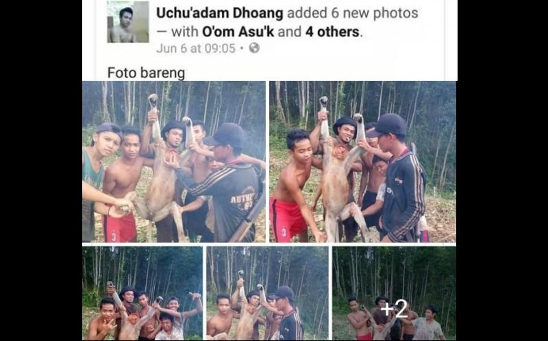 Akun FB Uchu'adam Dhoang unggah foto bekantan