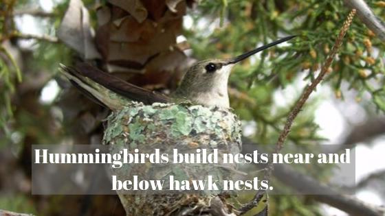 https://www.mycrazyemail.net/2019/09/dyk-10-facts-based-around-hummingbirds.html