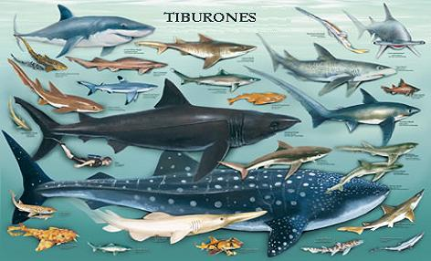 Resultado de imagen para imagenes linea geologica de los tiburones