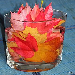 Kräftig bunte Blätter eigenen sich für eine solche Herbstcollage.