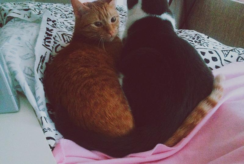 KuneCoco • Schnurrberts Jubiläum • Katzenliebe