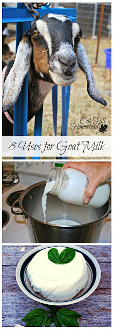 8 ways to use goat milk