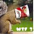WTF? Απεγκλωβισμός σκίουρου ...από κεσέ γιαουρτιού!