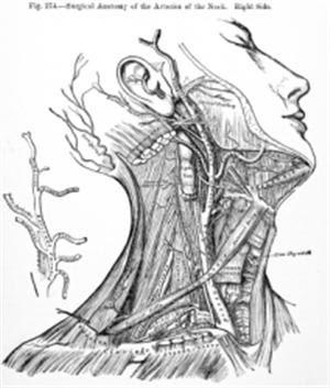 location of lymph nodes: Esophagus Cancer (Esophageal