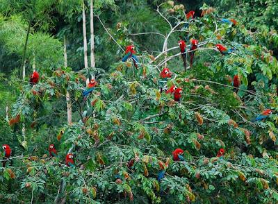 صور طيور غابات الامازون