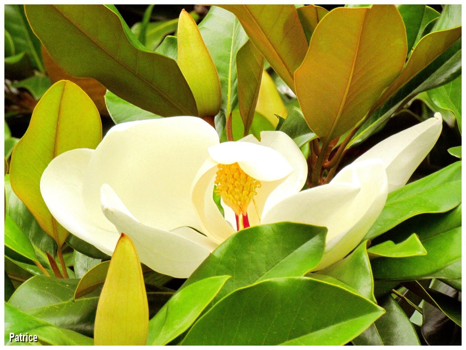 blog photos de patrice fleurs jardin des plantes. Black Bedroom Furniture Sets. Home Design Ideas