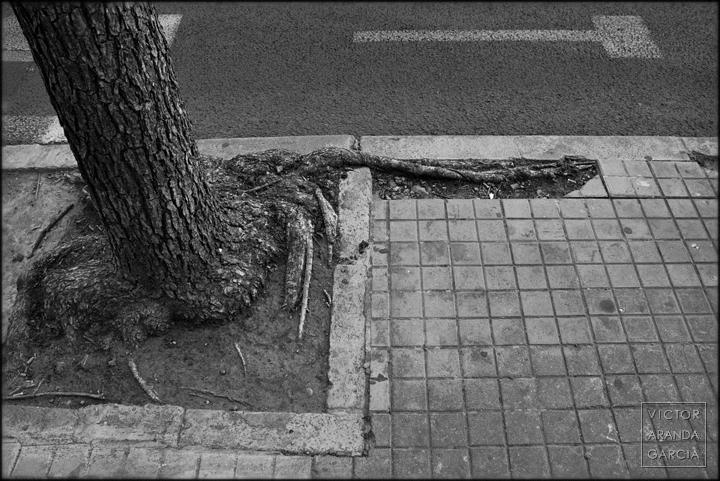 serie, fotografía, Límites, alcorque, árbol, raíz, naturaleza, Valencia, acera, arte