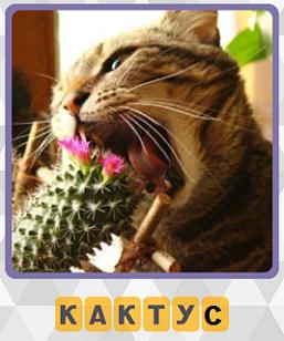 кошка пытается съесть кактус в игре 600 слов на 1 уровне