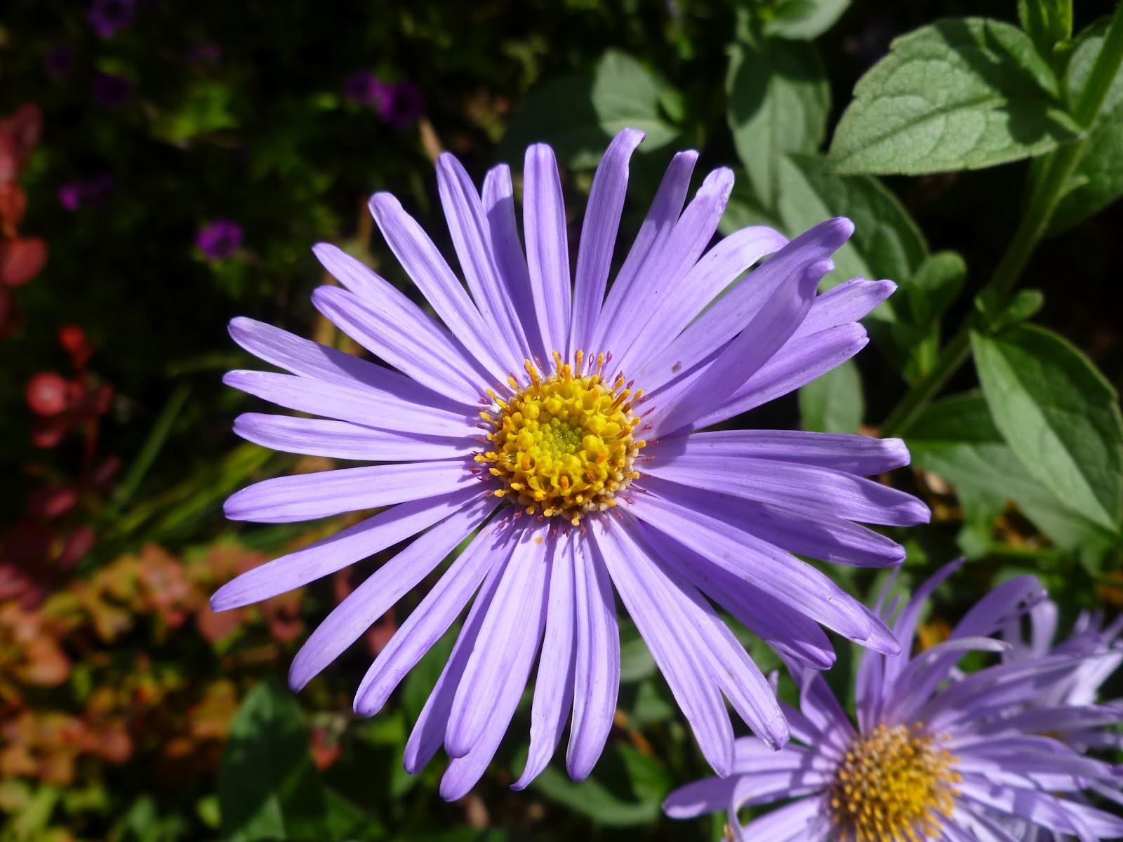 Queen Anne Bees: Bee Plants