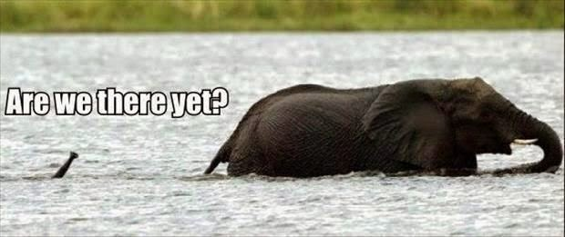 Funny Are We There Yet Swimming Baby Elephant Joke Picture
