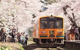 Kanagi Cherry Blossom Festival 金木桜まつり 五所川原市 芦野公園 Kanagi Sakura Matsuri Goshogawara Ashino Park Kouen
