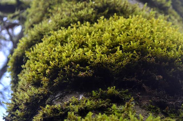 mossy tree bark