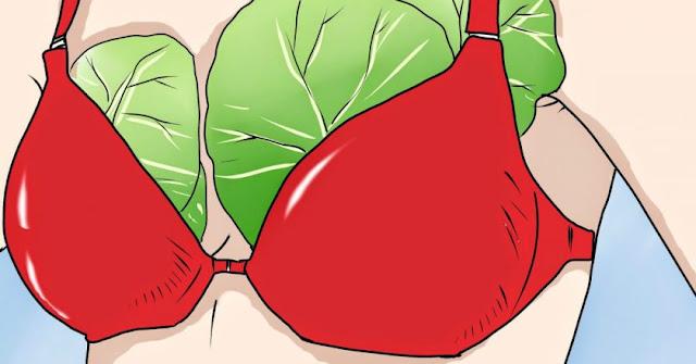Картинки по запросу капуста на грудь