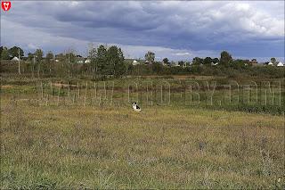 Налибокская пуща. Собака с села Камень