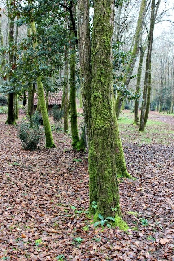 foto del bosque