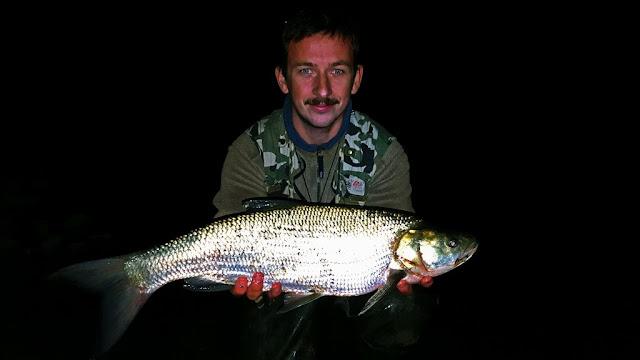 Asp fishing night river