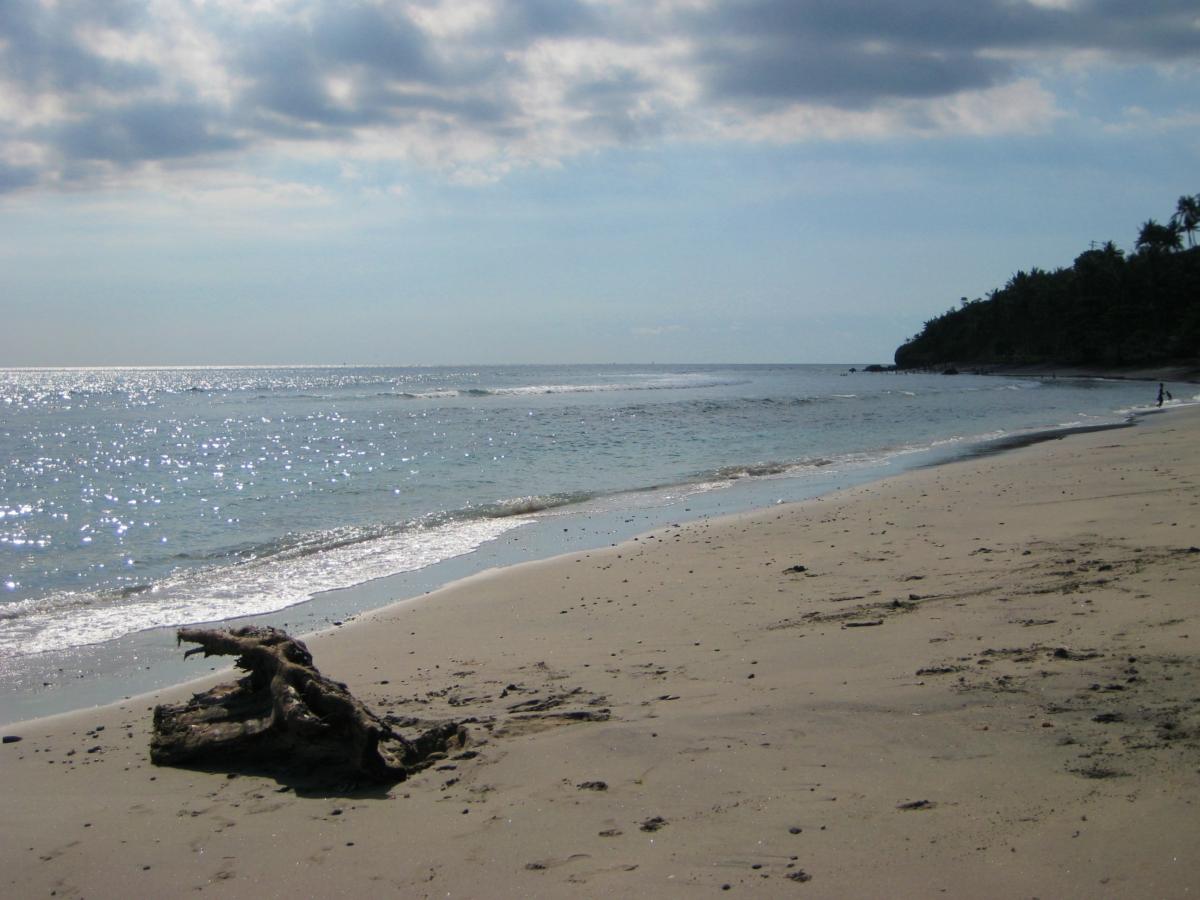 한적한 해변의 고목