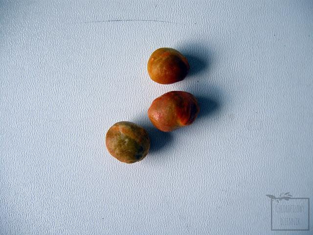 Pitanga, czyli goździkowiec jednokwiatowy (Eugenia uniflora) - wysiew, uprawa z nasiona, pestki, hodowla w domu w doniczce.