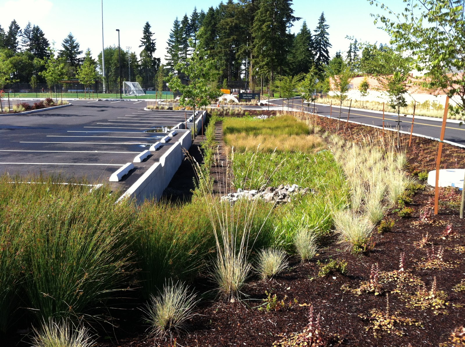 All Purpose Flower Rain Gardens At Luke Jensen Sports Park