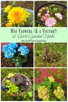 Secret Garden Herbs May flowers
